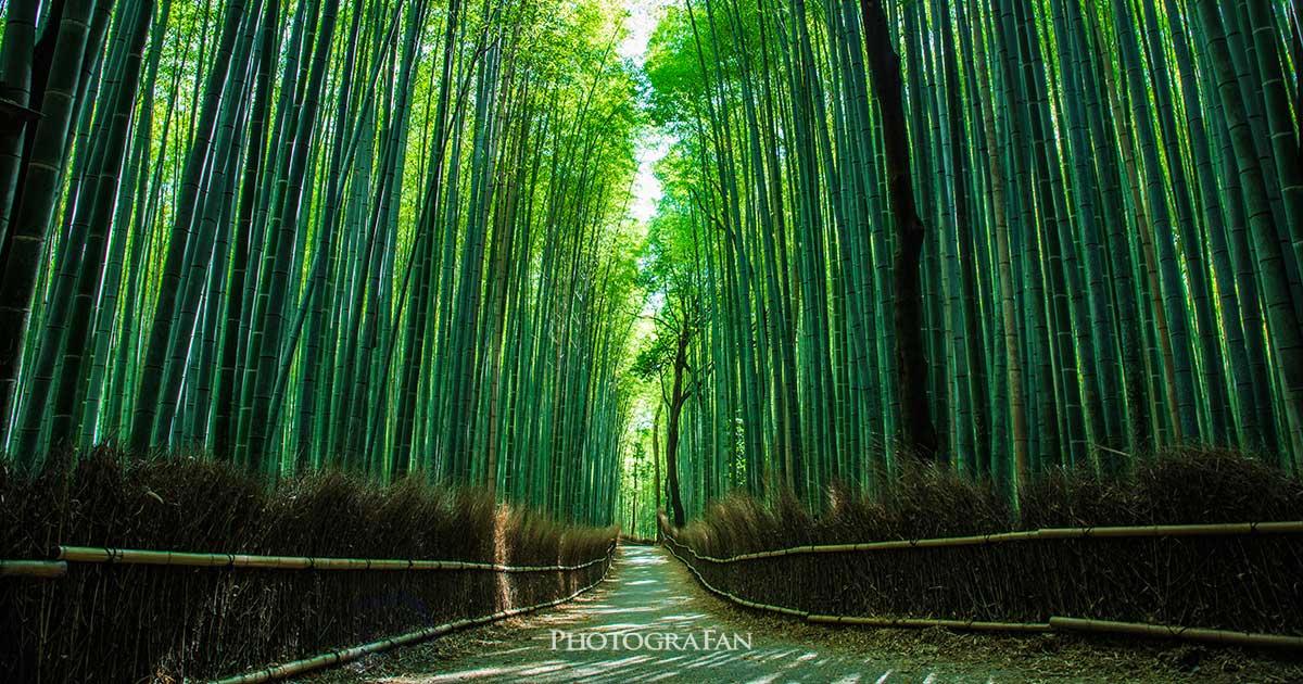 京都で日本らしい定番の写真を撮影