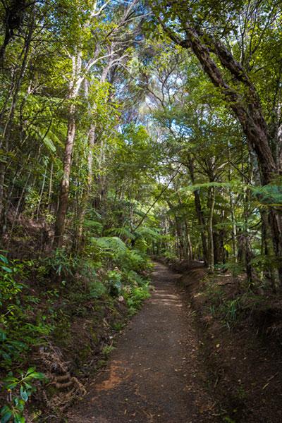Mokoroa Fallsのトレッキングコース