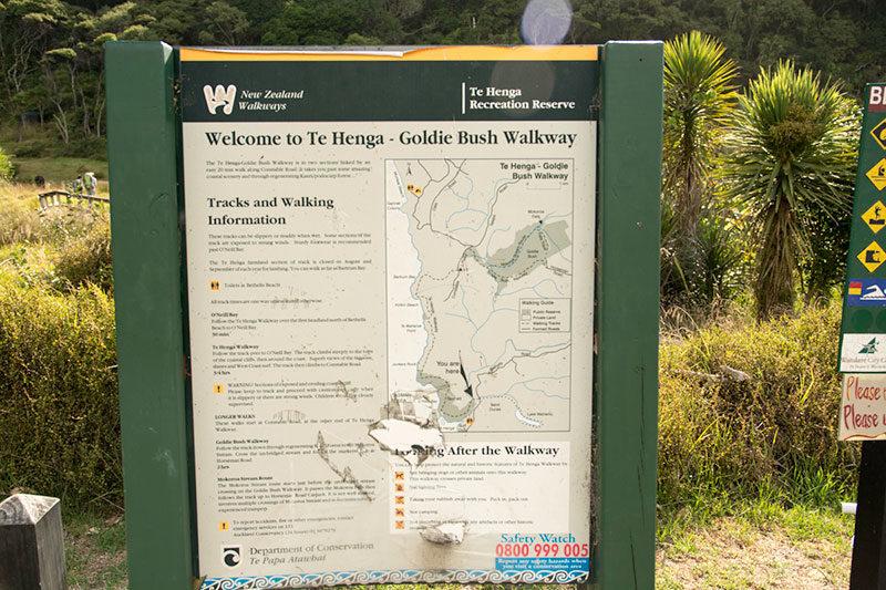Te Henga Walk Way