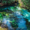 驚くほど綺麗な水が湧き出るニュージーランドの奇跡の青い泉 Blue Spring