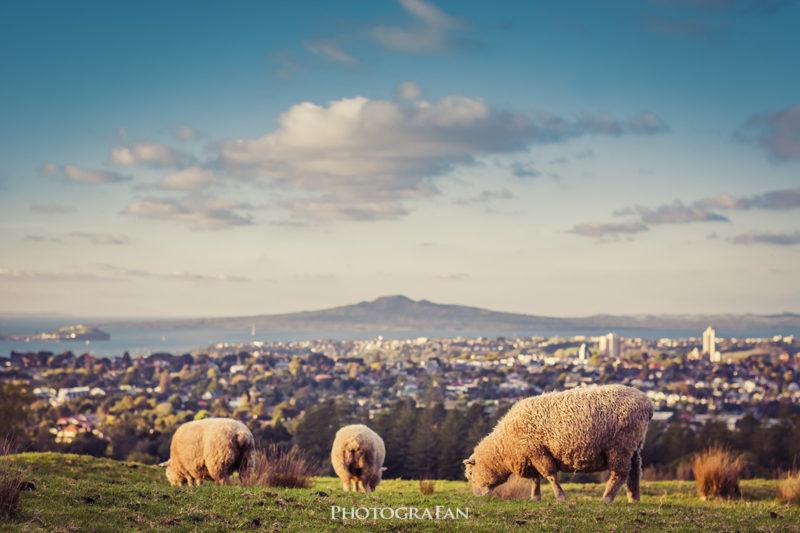 ランギトト島と羊