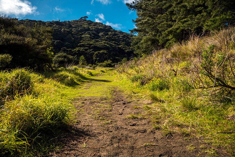 Lake Wainamu Track