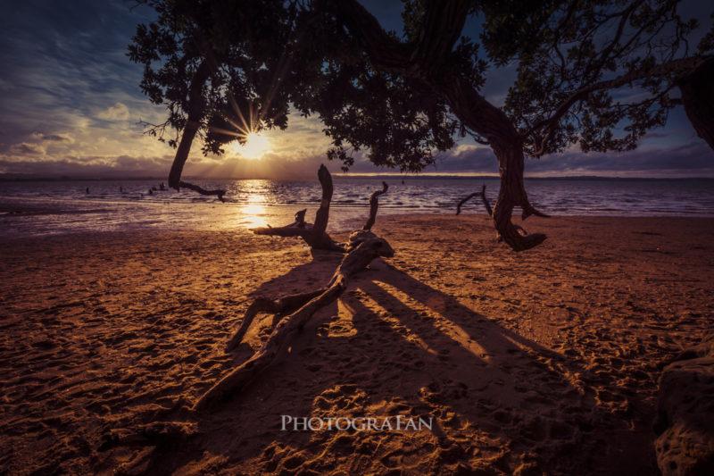 夕日と木の枝からの光条