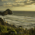 海が見渡せるオークランドの隠れた絶景スポット O'Neills Bay – ニュージーランド