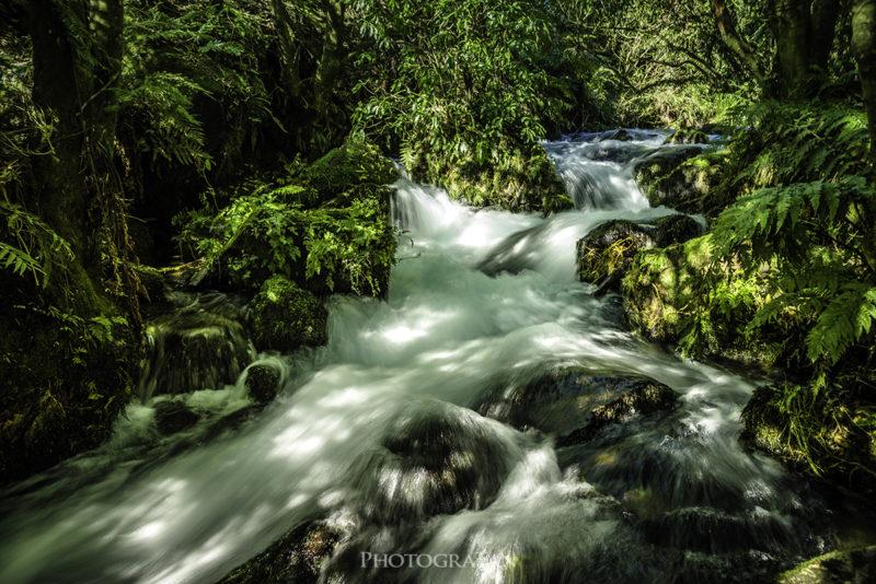 Te Waihou walkwayにある滝