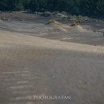 オークランドの巨大な砂丘 Wainamu Sand Dune ニュージーランド