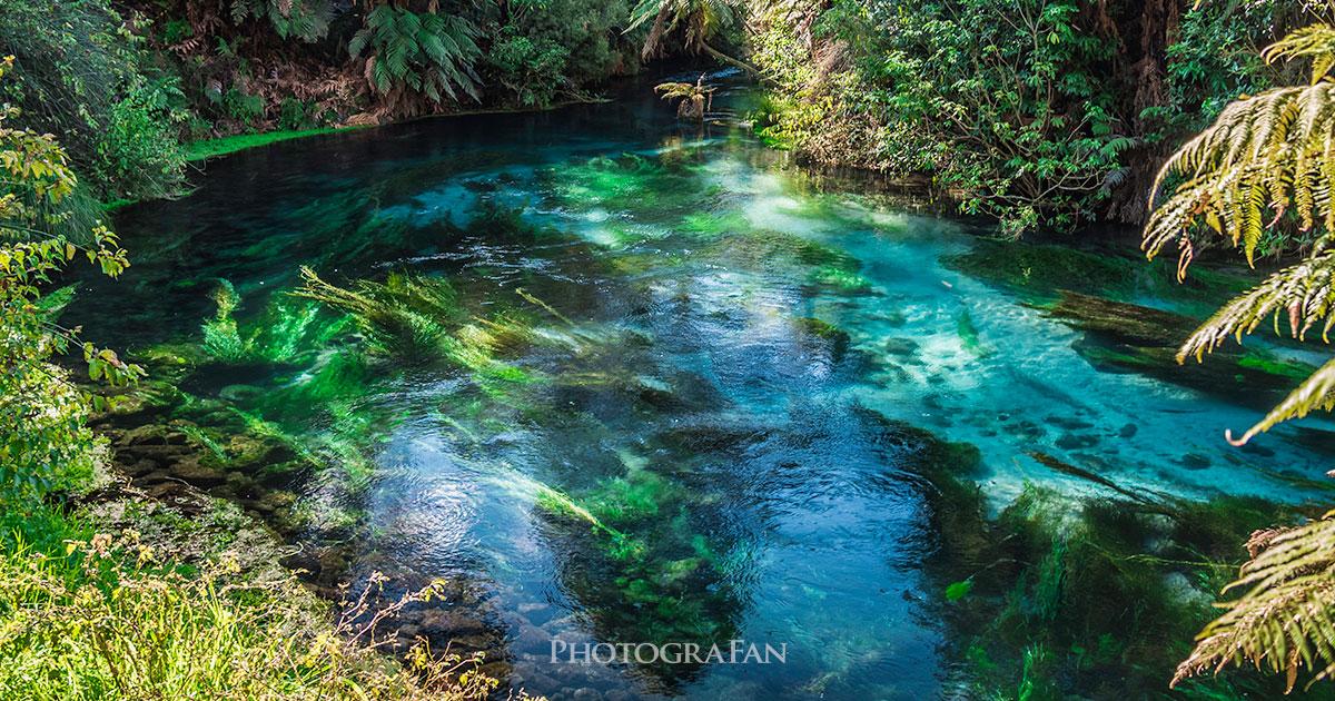 ニュージーランドの奇跡の青い泉 Blue Spring
