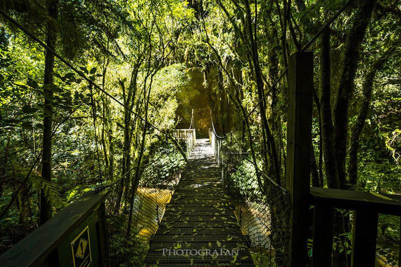 Mangapohue Natural Bridge遊歩道の吊り橋