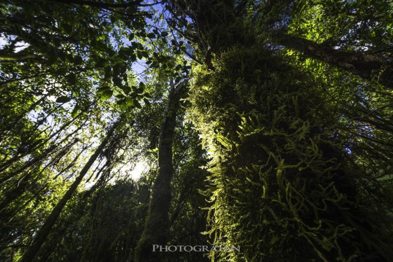 Marokopa Fallsの途中の木々