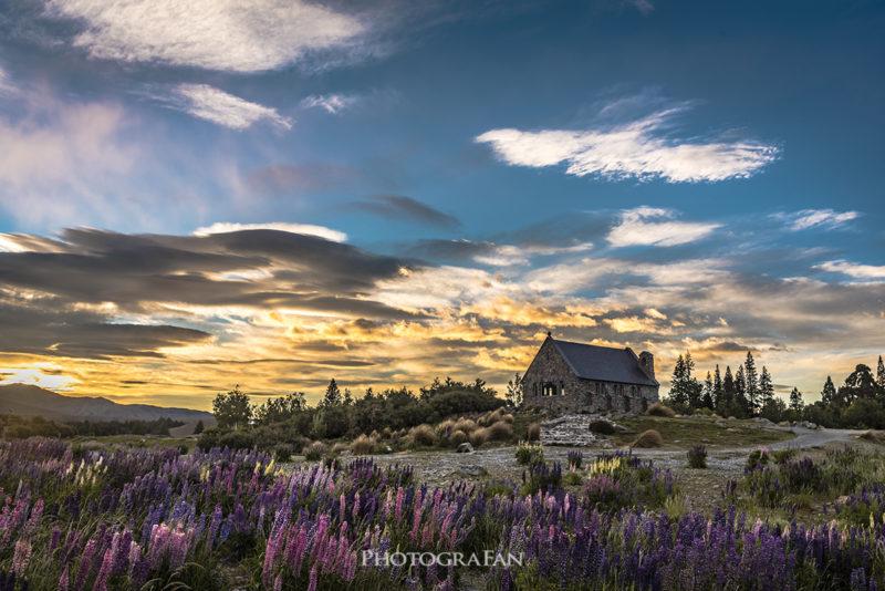 テカポ湖畔の善き羊飼いの教会とルピナス