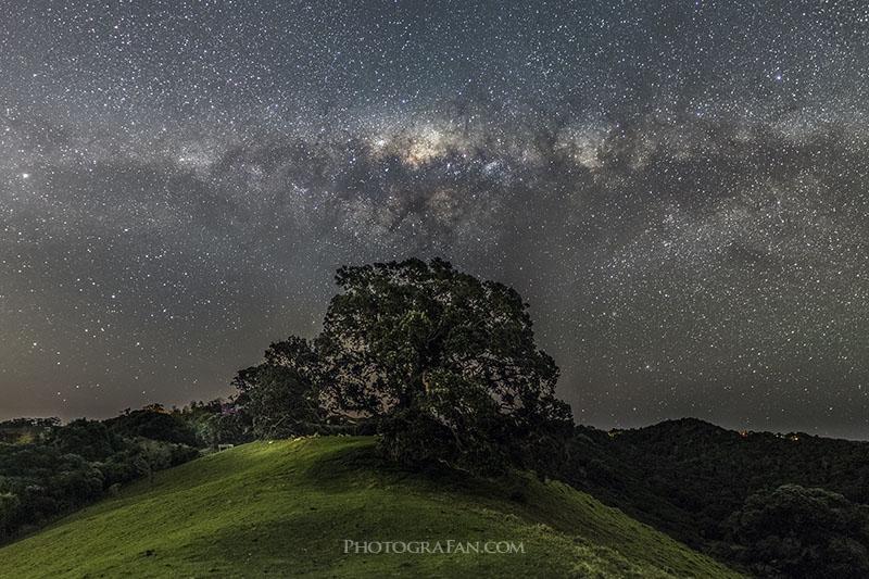 木の上のGalactic Kiwi(銀河のキーウィ)