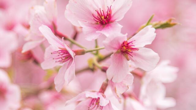 【2021年】🌸桜の撮影方法!カメラ初心者でも撮れるコツ